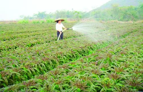 雁山区大埠乡优化产业结构促农增收