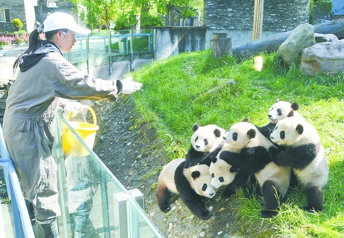 熊猫爱吃的食物简介