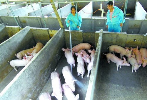 小型养猪场设计