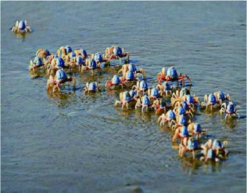 在此与您的孩子一起:走海滩,赶海潮,捉海蟹,挖海螺,拾海贝,抓海虾,吹
