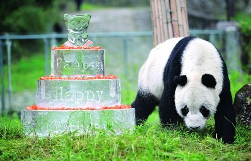 长寿大熊猫