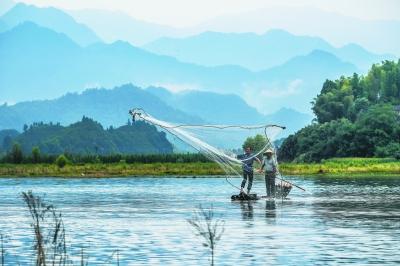 8月1日,淳安县汾口镇红星村的渔民乘着竹排,在千岛湖的支流武强溪
