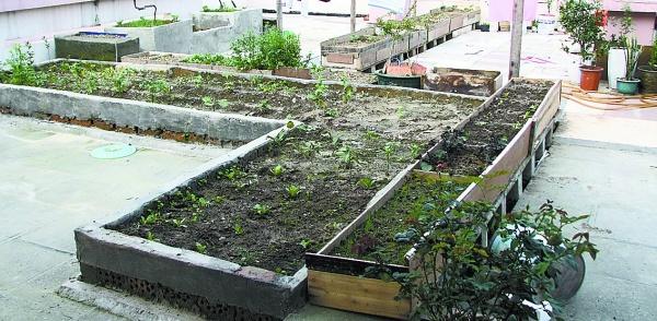 阳台菜园种菜设备 多肉植物种子图片