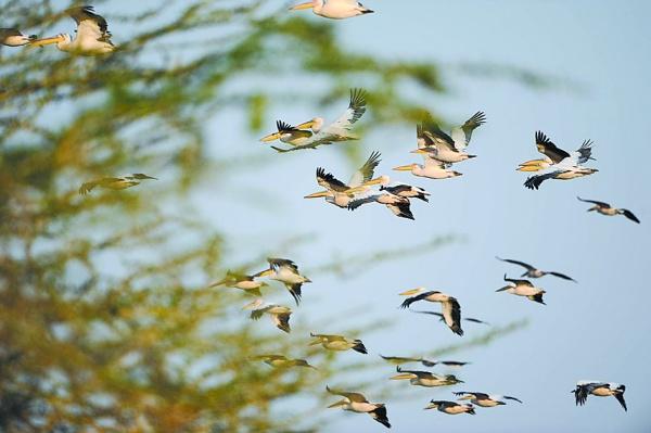 马尼亚拉湖的动物故事