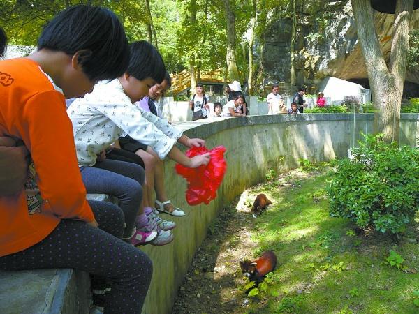 给动物喂食是对它们的伤害