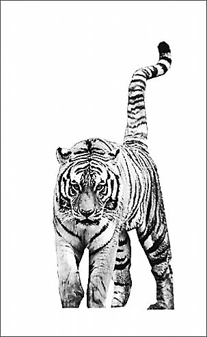 芜湖动物园老虎撞门外逃遭射杀