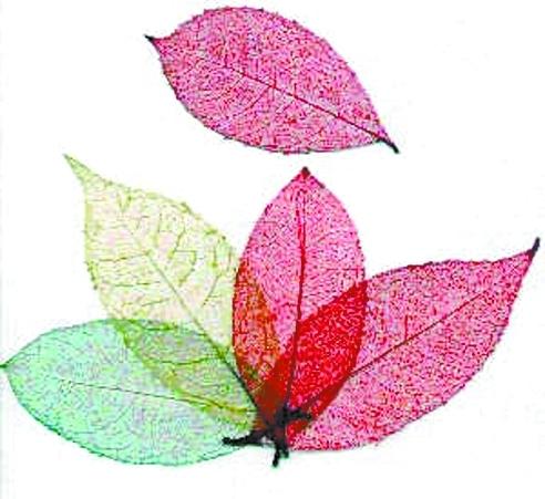 如何用树叶做书签呢?