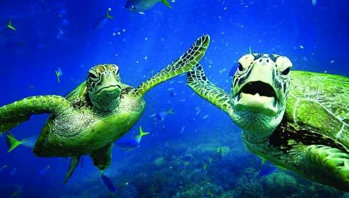 桂林动物海底世界